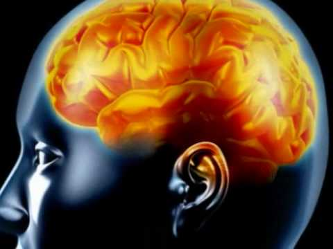 The Central Nervous System (Part 1: The Brain) - YouTube