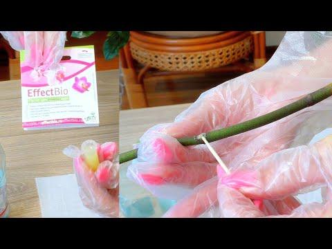 Цитокининовая паста?! За или против? В каких случаях я использую её для орхидей?