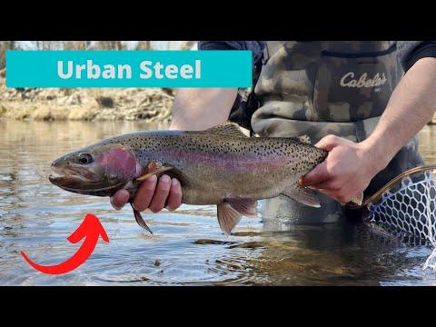 Urban River Steelhead Fishing- Boise River