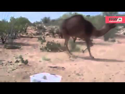 Funny Animals Fail Compilation