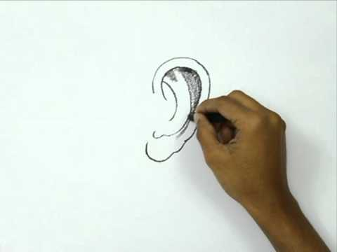 How to Draw an Ear - YouTube