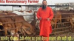 कामधेनु गौशाला -जालंधर, INDIA's Best Gaushala.- 95 Rs बिकता है दूध। यहाँ से खरीद भी सकते है किसान.