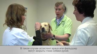 Интраназальная вакцина для собак Нобивак КС