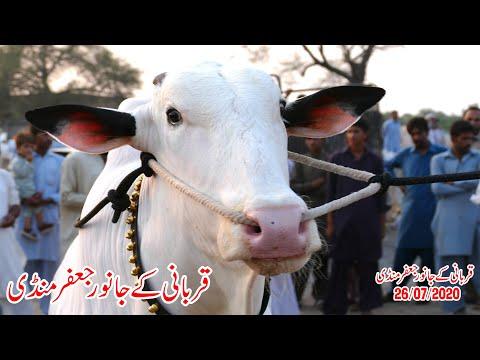 Jaffir Mandi 26 07 2020 Sunny Video Fateh Jang