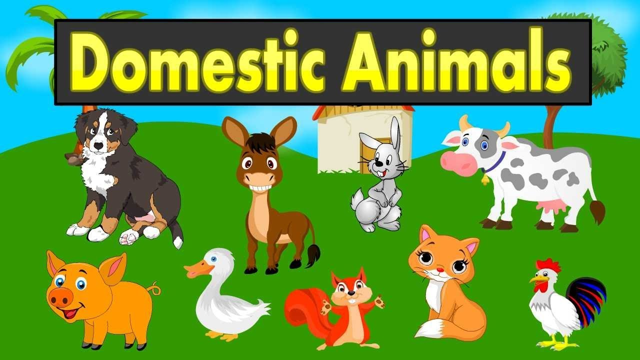 animals domestic farm names