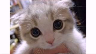 Песня котиков мимими :3