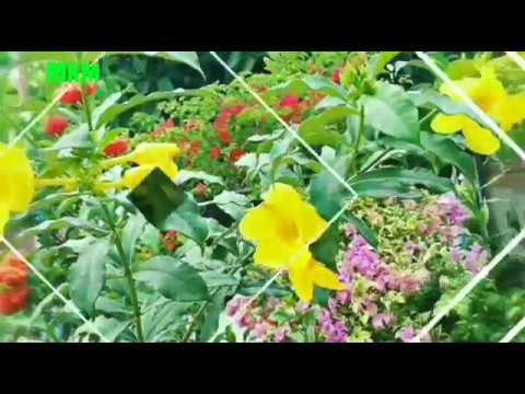 Contoh Taman Bunga Minimalis Depan Rumah Type 36