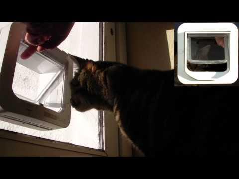 Kito & Kadoo Get trained on their Sureflap catflap