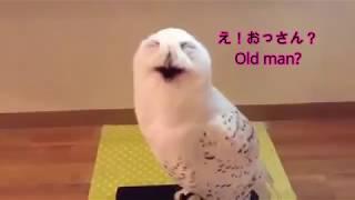 Download lagu 鳴き声が面白い!そしておかしい!動物動画 Cry is interesting