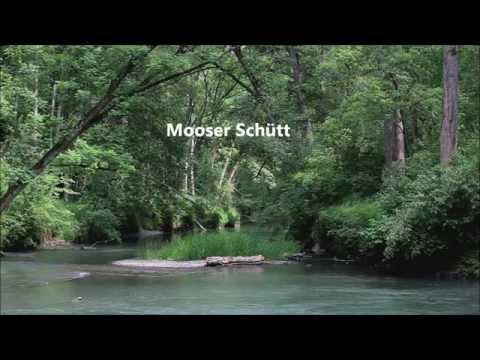 Deutschlands letzte Auwälder: Mooser Schütt