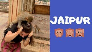 I GOT ATTACKED BY MONKEYS IN JAIPUR :D