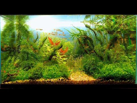"""Удобрение """"Нитраты"""" для аквариумных растений своими руками."""
