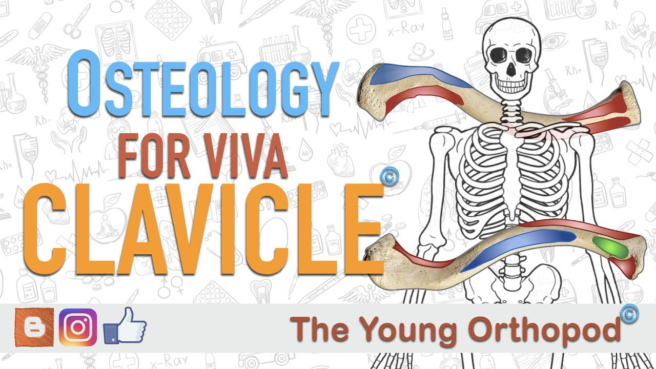 Clavicle - Osteology for Viva #01 - YouTube
