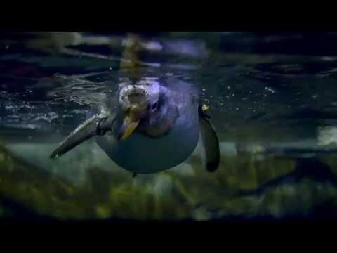 Animals at Loveland Living Planet Aquarium in Draper, UT