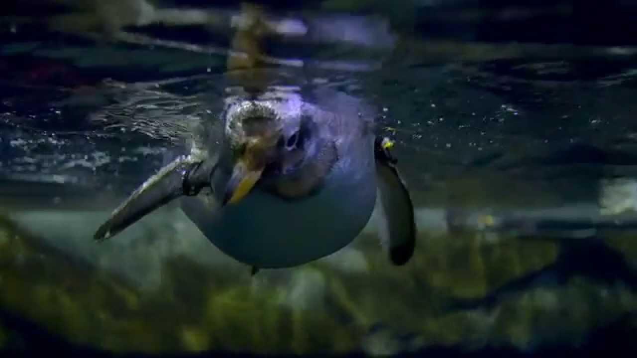 Fish aquarium utah - Animals At Loveland Living Planet Aquarium In Draper Ut