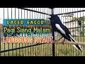Kacer Poci Gacor Ngeplong Di Pagi Hari Cocok Untuk Pancingan Pagi Siang Malam Langsung Nyaut  Mp3 - Mp4 Download