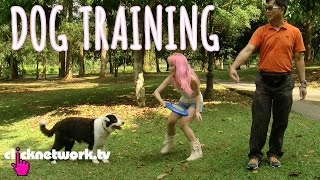 Dog Training - Xiaxue's Guide To Life: Ep119