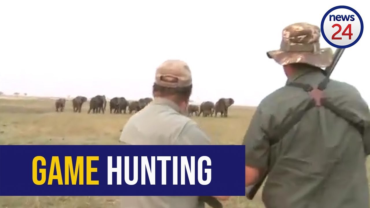 GRAPHIC WARNING - WATCH: 'Hit it between the eyes'- elephants charge at hunters after one