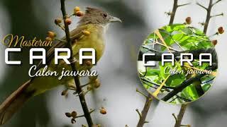 SUARA ASLI CUCAK JENGGOT|| COCOK UNTUK  MASTERAN