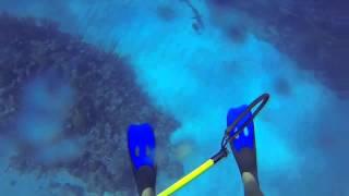 Karayip Okyanusunda Kopekbalığı Saldırısı