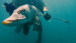 Трофейная подводная охота на щуку в Туве