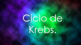 Glucolisis \ Ciclo de Krebs \ Cadena de transferencia de electrones.