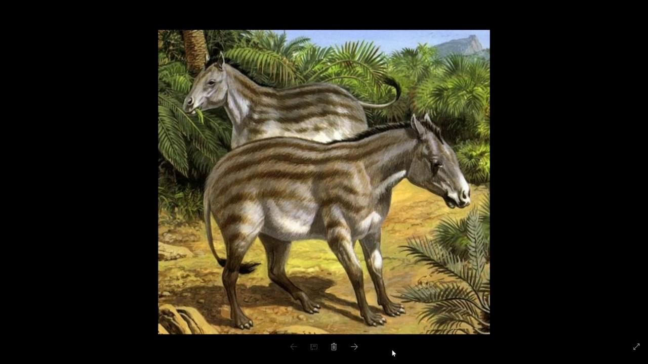 Предок лошади из америки и почему зебру не одомашнили.