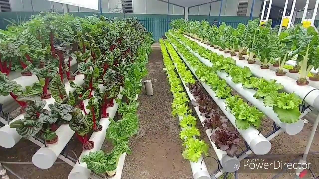 La hidropon a para desarrollar huertos urbanos y rurales for Imagenes de hidroponia