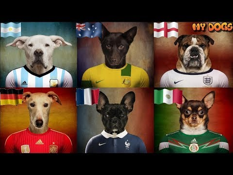 Dogs & World Cup 2018   A National Team Matched To A Breed Of Dog