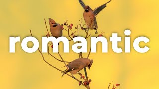 "🌺 Folk Mandolin & Romantic Music (For Videos) - ""Wanderlust"" by Scott Buckley 🇦🇺"