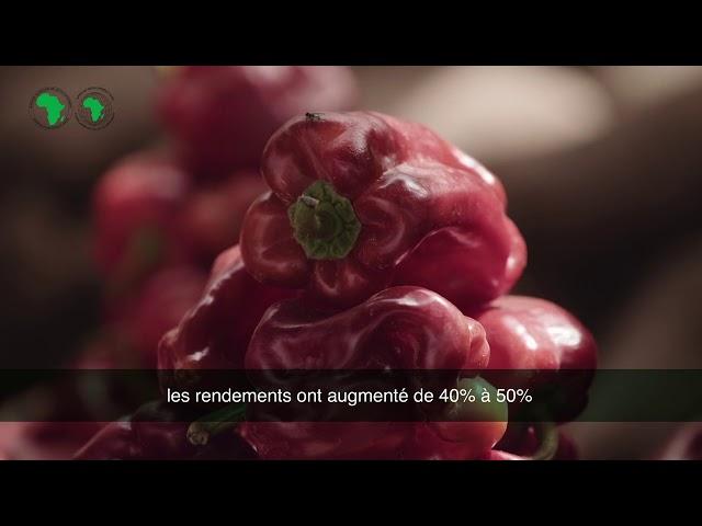 NIGERIA FAIRE LA DIFFERENCE USINE DENGRAIS INDORAMA 720p