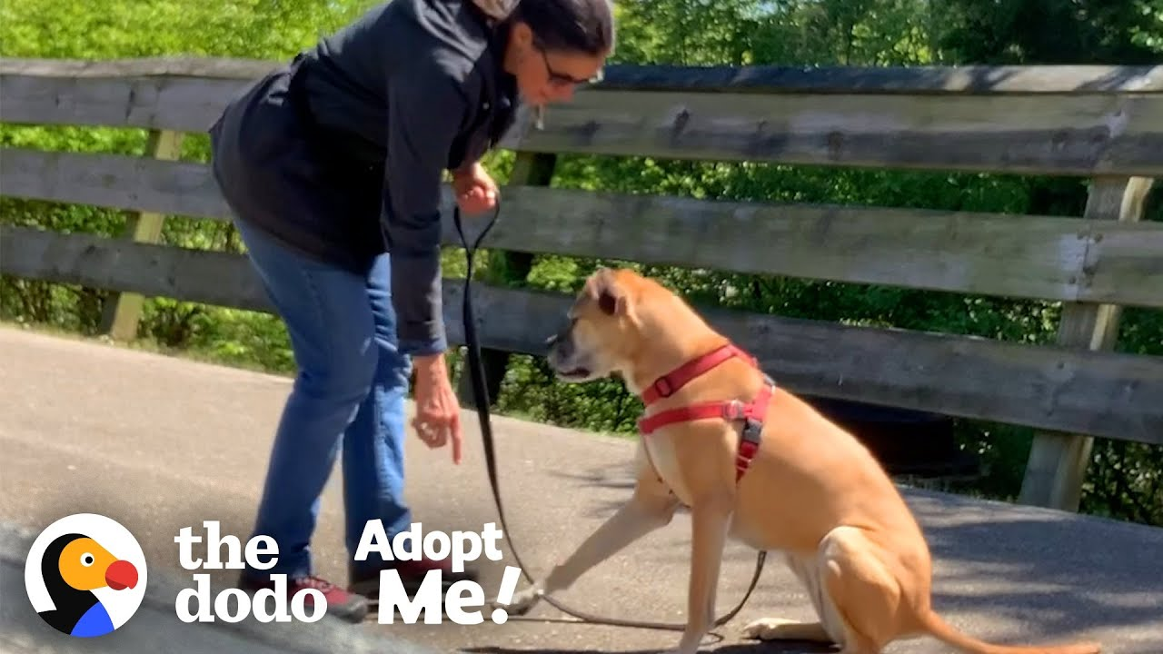 Dog Living In The Shelter Since 2015 Keeps Getting Returned | The Dodo Adopt Me!