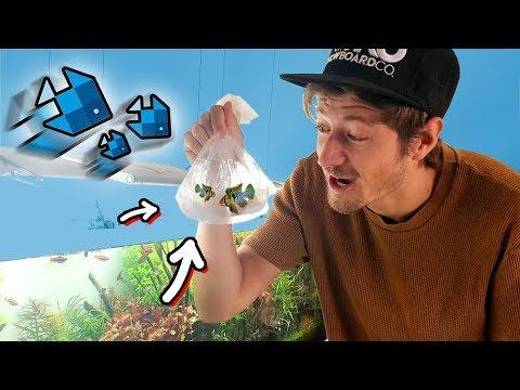 Meine Lieblingsfische kommen in's XXL Aquarium! 😍