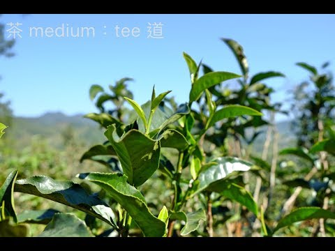 Tea Travel Yunnan 2018 China Medium Tee