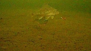 Подводная камера для рыбалки: советы по выбору видеокамеры