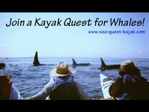 Orca Whale Kayaking Tours in Washington - Kayak with Killer Whales!