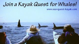 Orca Whale Kayaking Tours in Washington - Kayak with Killer Whales!