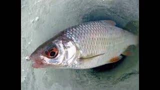 Зимняя рыбалка Капчагай Потеряли ключи