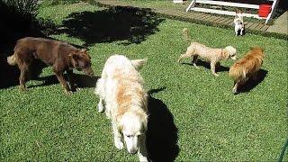Dog Social Skills