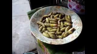 The Keeda (Insect) Market in Kohima, Nagaland  (Dec 2010)