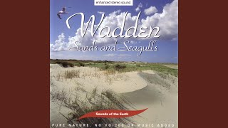 Wadden - Sands And Seagulls