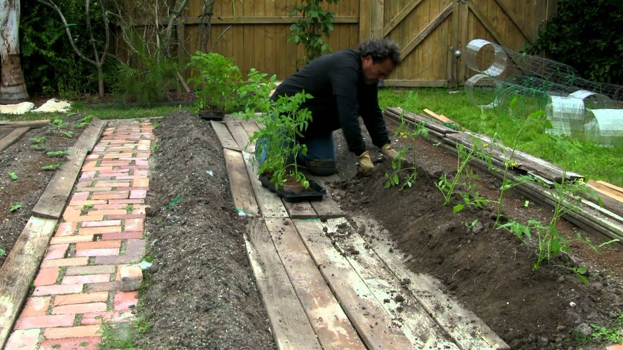 Planting Roma Grape Tomatoes Part 1 Of 2 150