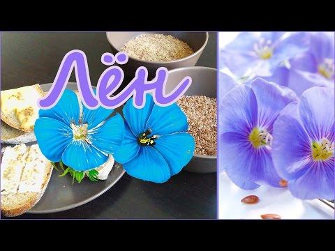 Семена льна - применение, полезные, лечебные свойства