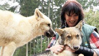 Wildpark Lüneburger Heide: Der süße Nachwuchs von Wolfsmutter Askani