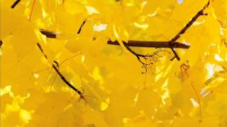 Sono le foglie (canzone scienze scuola primaria)