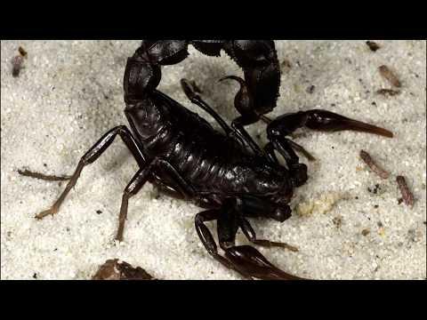 Самые опасные насекомые в мире.