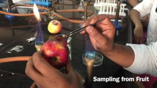 Microbiological Sampling from Spoiled Fruit