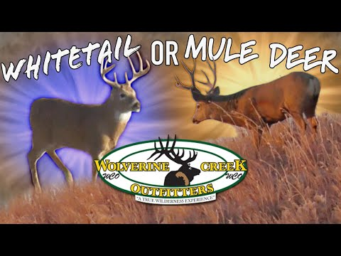 YOUR CHOICE! WHITETAIL Or MULE DEER HUNTING In Nebraska