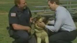 Police`s German Shepherd Bites Man`s Face