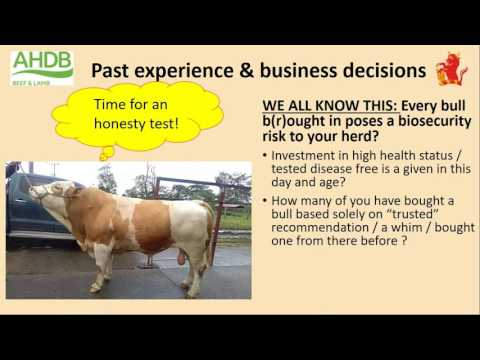 Reducing suckler calf mortality – learnings from across the globe Webinar